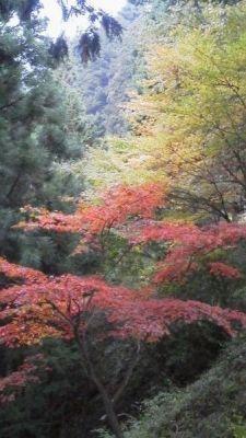 長尾平の紅葉