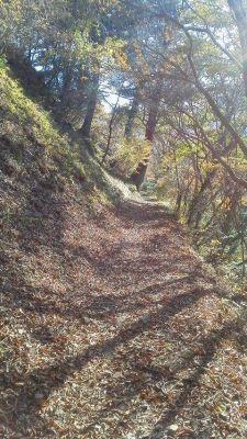 落ち葉の山路
