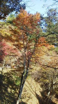 大塚山の紅葉